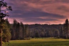 Sequoia λιβάδι Στοκ φωτογραφίες με δικαίωμα ελεύθερης χρήσης