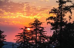 Sequoia σκιαγραφίες ενάντια στο πορτοκάλι, ροζ, κόκκινο, ουρανοί marsala, φαράγγι βασιλιάδων Στοκ φωτογραφία με δικαίωμα ελεύθερης χρήσης