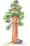 Sequoia Royalty Free Stock Photos