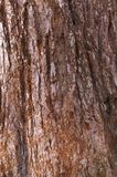 Sequoia. Abstract background from the bark of a sequoia tree Stock Photography