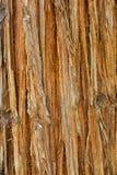 Sequoia bark Royalty Free Stock Photo