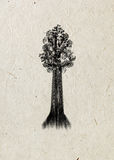 Sequoia. Drawing tree on a beige rice paper. Black silhouette. Graphic arts Stock Photography
