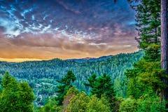 Sequoia en pijnboombomen in Guernewood-Park royalty-vrije stock foto's