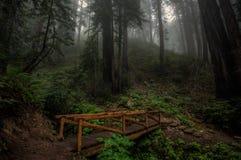 Sequoia Forest Bridge in Big Sur fotografie stock