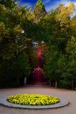 Sequoia i en trädgård arkivbilder