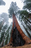 Sequoia and Kings Canyon National Park Royalty Free Stock Photography