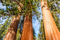 Sequoia Nationaal Park bij de herfst Royalty-vrije Stock Foto's