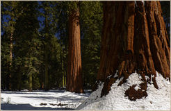 Sequoia Nationaal Park Californië, de V.S. Royalty-vrije Stock Foto