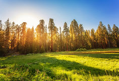 Sequoia Nationaal Park in Sierra Nevada royalty-vrije stock afbeeldingen