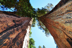Sequoia National Park. This picture was taken in Sequoia National Park,California Stock Images