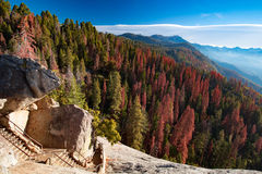 Sequoia National Park. Autumn sunrise over redwood trees at Moro Rock in Sequoia National Park, California, USA Stock Photography