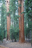 Sequoia National Park Royalty Free Stock Photos