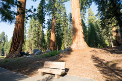 Sequoia National Park, California, USA Royalty Free Stock Photos