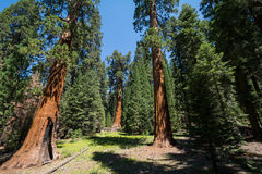 Sequoia National Park, California, USA Stock Images