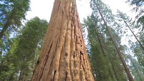 Sequoia national park. stock footage