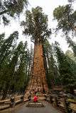 Sequoia National Park Stock Photography