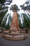 Sequoia National Park Royalty Free Stock Photo
