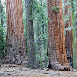 Sequoia National Park Royalty Free Stock Images