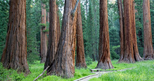 Sequoia National Park Stock Images