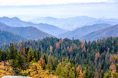 Sequoia National Park mountain landscape at autumn Stock Images