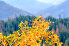 Sequoia National Park mountain landscape at autumn Stock Photography
