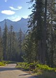 Sequoia National Park scene. Scenic Sequoia National Park road with deer Royalty Free Stock Photo