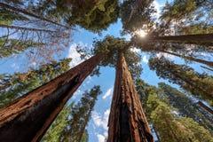 Sequoia Nationale Park stock afbeeldingen