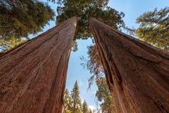 Sequoia Nationale Park stock afbeelding
