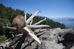 Sequoia Nationale Park royalty-vrije stock fotografie