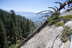 Sequoia Nationale Park royalty-vrije stock foto's