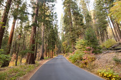 Sequoia Nationale Park stock foto's
