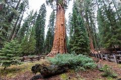 Sequoia Park immagini stock