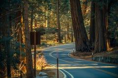 Sequoia Park Road Trip Stock Image