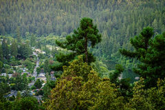 Sequoia and pine trees in Guernewood Park. On Russian River Stock Photos