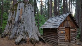 Sequoia stump with cabin Royalty Free Stock Images