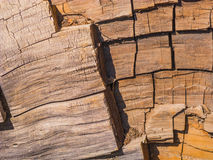 Sequoia tree in detail Stock Photos