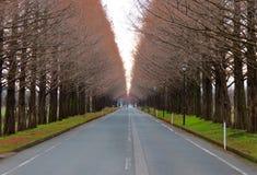 Sequoia vermelha Promonade de Makino, Shiga, Japão Fotos de Stock
