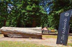 Sequoia vermelhas em Rotorua Nova Zelândia Imagens de Stock