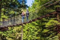 Sequoia vermelhas Treewalk - Rotorua fotografia de stock