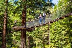 Sequoia vermelhas Treewalk - Rotorua imagens de stock