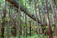 Sequoia vermelhas Treewalk - Rotorua foto de stock