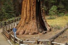 Sequoiamacical Verrukt Bosje en een Uiterst klein Meisje Stock Afbeeldingen