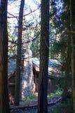 Sequoiamedborgare Forest Park arkivbild