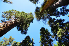 Sequoianationalpark Royaltyfria Bilder
