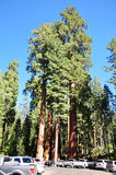 Sequoianationalpark Royaltyfri Foto