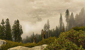 Sequoianationalpark Arkivfoto