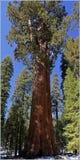 Sequoianationalpark Kalifornien, USA Arkivfoto