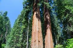 Sequoianationalpark, USA arkivbilder