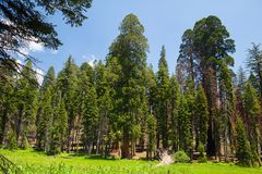 Sequoianationalpark, USA arkivbilder