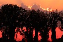 Sequoyah Dusk Royaltyfria Bilder